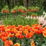 Які саме квіти цвітуть навесні - фото і назви