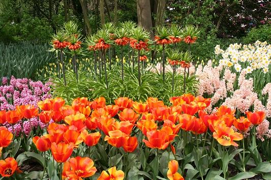 Квіти цвітуть навесні фото і назви