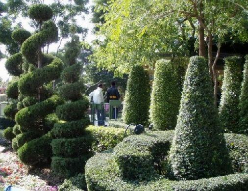 Бруслина карликова для створення дизайну саду.