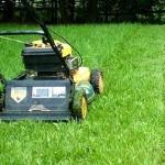 Коли вперше стрижуть газонну траву?