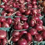 Як виростити ялтинську цибулю?