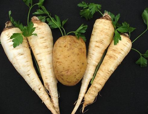 Пастернак овоч і його фото.