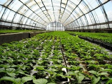 Підготовка теплиці для вирощування овочів - грунт, добрива.