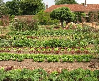 Осінні роботи в саду у вересні