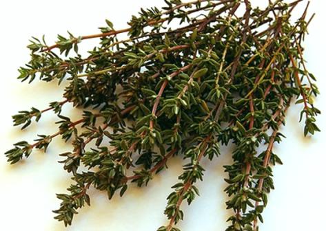 лікарські рослини чебрець