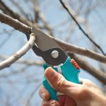 Обрізка молодих дерев груш.