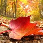 Листя фруктових дерев в якості добрива