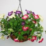 Висячі сади Семіраміди, або як створити підвісний квітник?