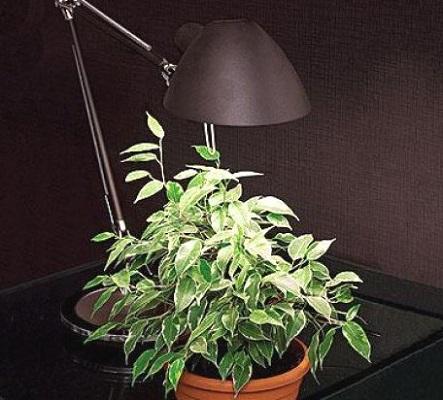 Освітлення для кімнатних рослин