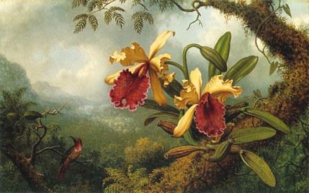 Легенди і правдиві розповіді про орхідеї.