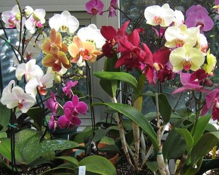 Хвороби орхідей - лікування.