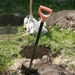 Підготовка посадкових ямок для саджанців