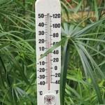 Вплив тепла на рослини.