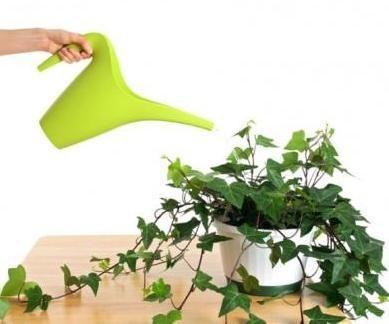 Поливаємо і обприскуємо кімнатні рослини