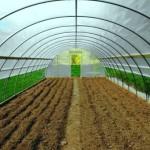 Чому ґрунт в теплиці зеленіє?