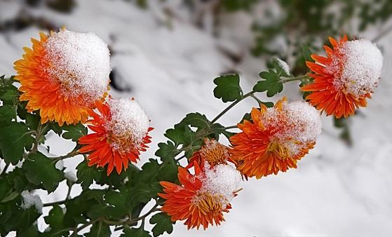 Картинки зими