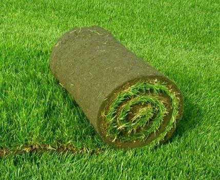 Чому вибирають штучний газон ніж сіють натуральну траву?