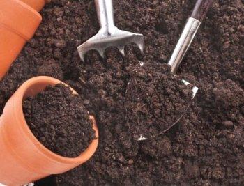 Приготування ґрунтової суміші для вирощування розсади.