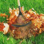 Прибирання опалого листя в саду