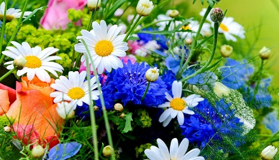 Посів квітів на зиму - технологія і переваги.