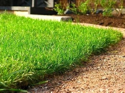 Як правильно посіяти газонну траву?