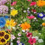 Готуємо насіння квітів до весняного посіву