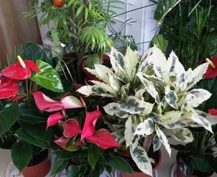 Фактори, що впливають на життєдіяльність рослин.