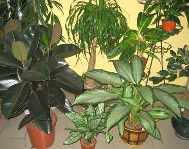 Період спокою кімнатних рослин.