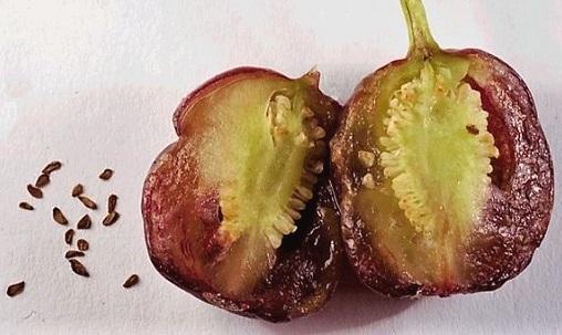 Розмноження і вирощування фуксій із насіння.