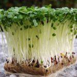 Як виростити крес-салат в домашніх умовах на підвіконні.