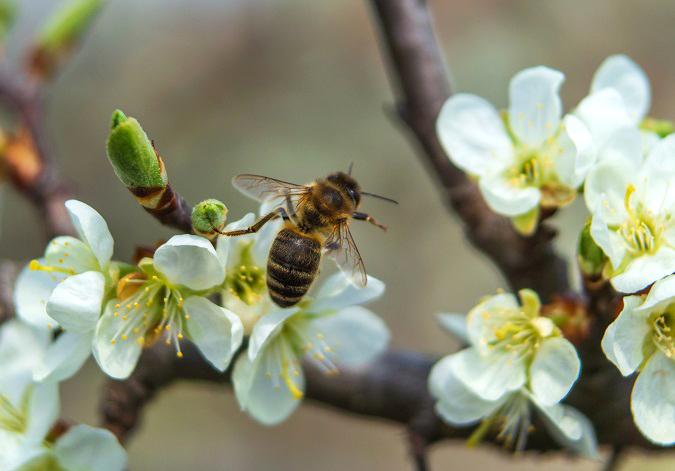 Чи можна кропити дерева у період цвітіння.