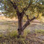 Чим обробляють сад восени від шкідників й хвороб
