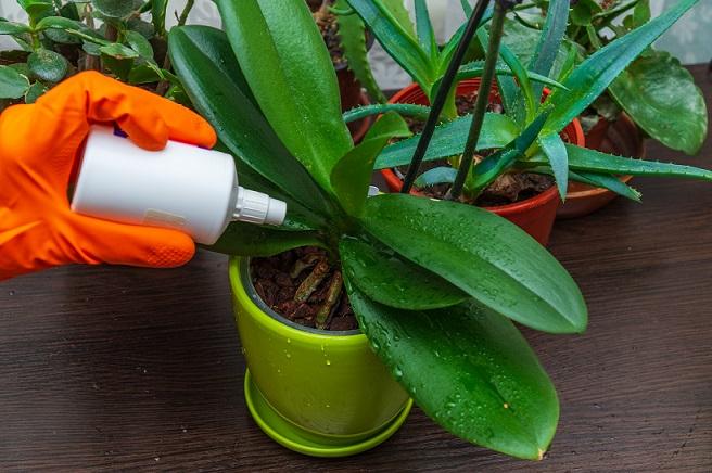 Щитівка на кімнатних рослинах, як із нею боротися.